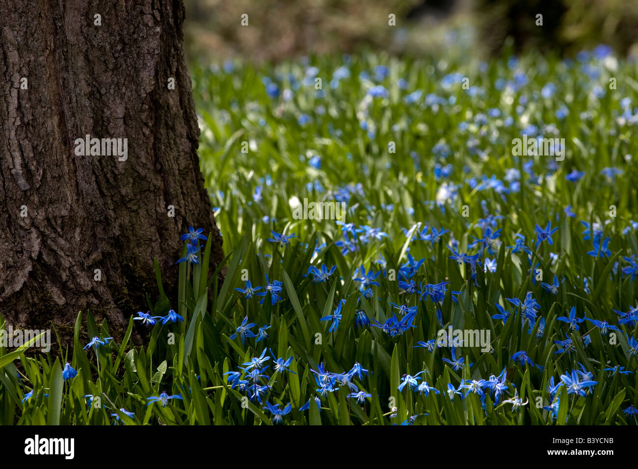 Wildflowers by tree trunk - Stock Image