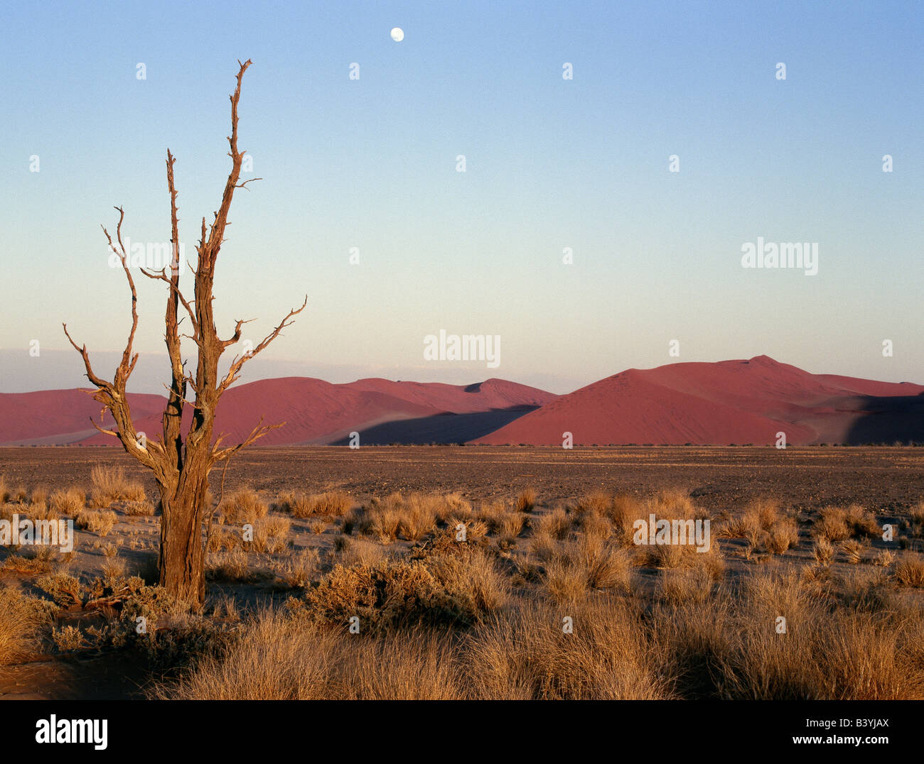 Namibia, Namib Desert, Sesriem. Full moon over the dunes at Sesriem in the Namib-Naukluft Park. Patterned by, and Stock Photo