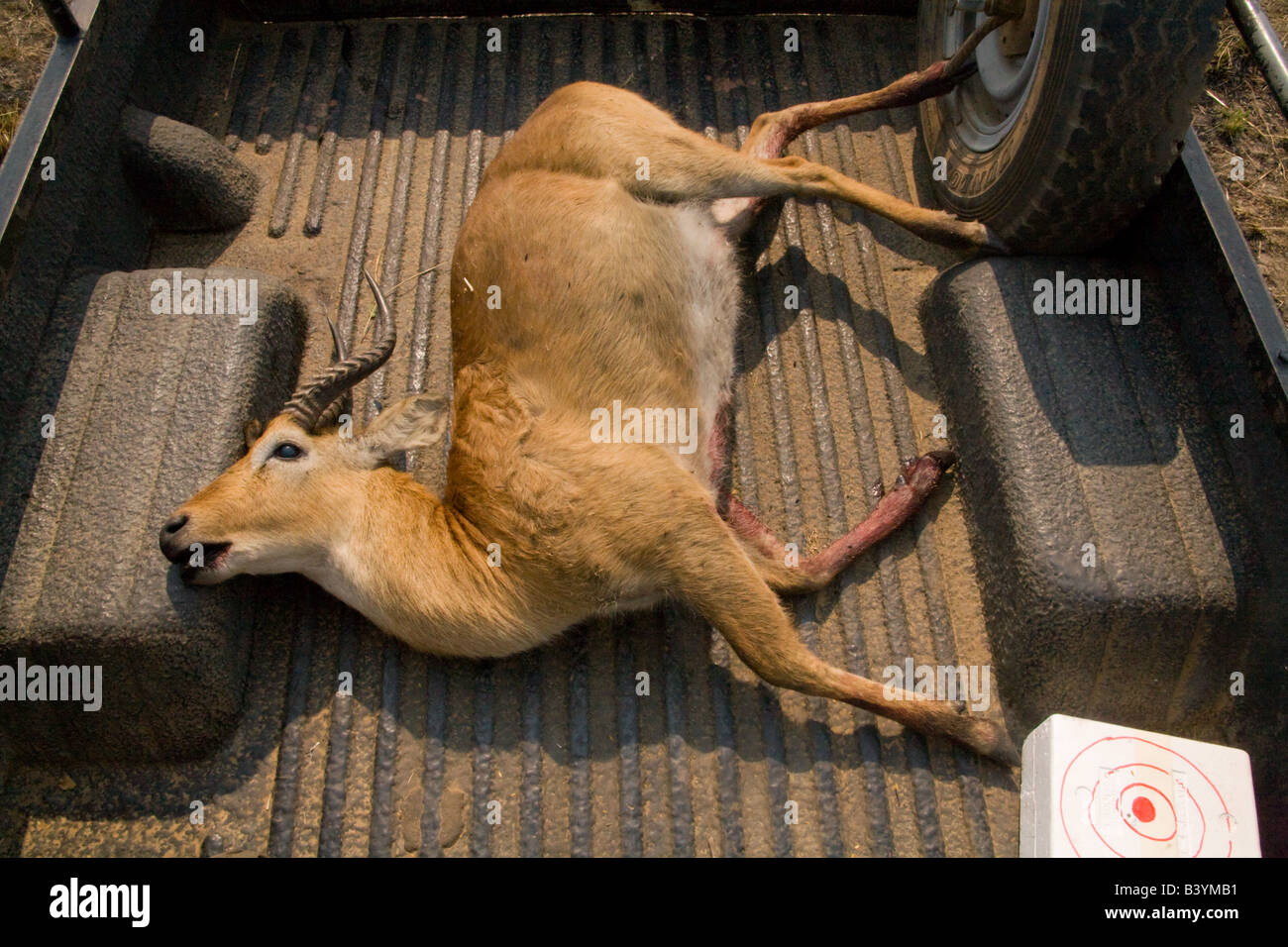 Dead Deer Truck High Resolution Stock Photography And Images Alamy