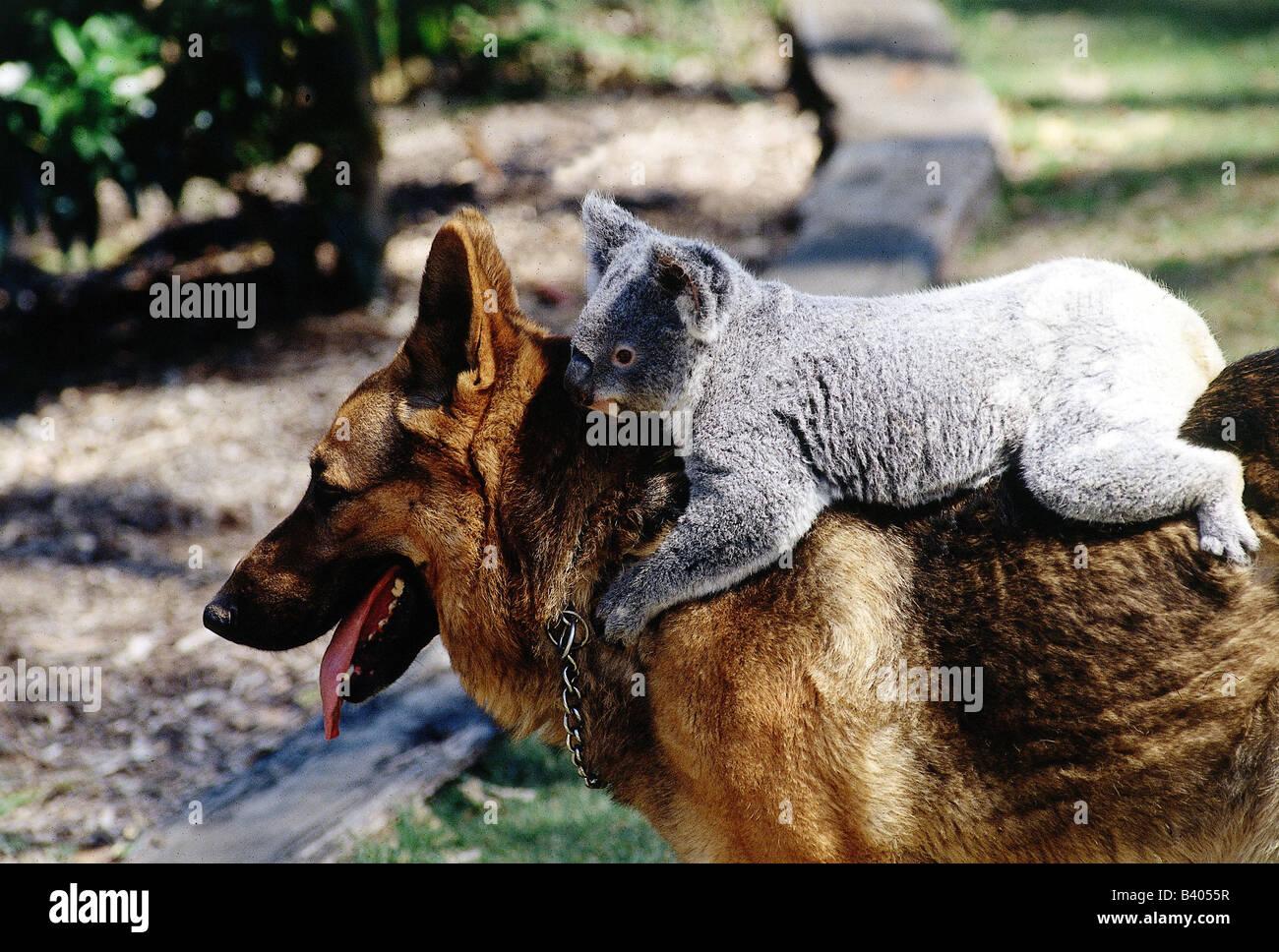 [Image: zoology-animals-features-animal-friendsh...B4055R.jpg]