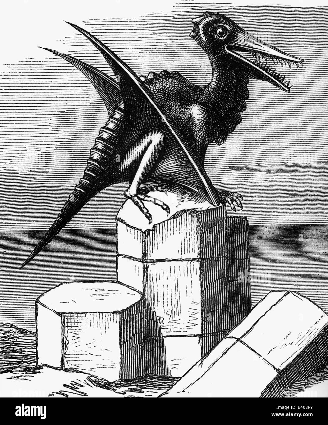 prehistory, animals, saurs, Pterodactylus, wood engraving, 19th century, pterosaur, late jurassic period, zoology, - Stock Image