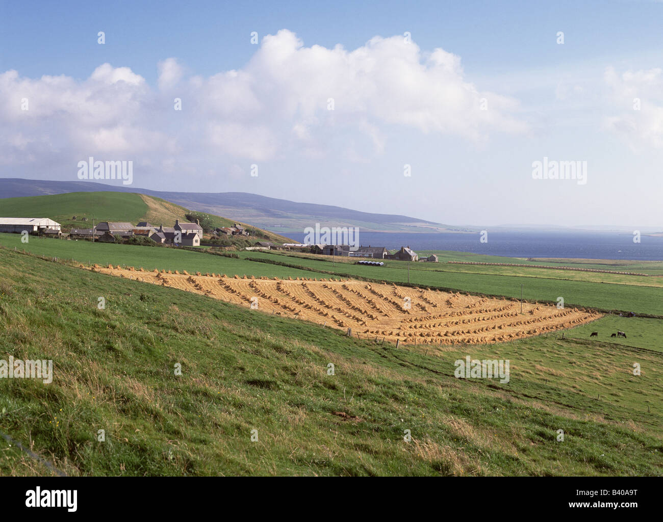 dh  EVIE ORKNEY Farmhouse stacked harvested hayfield rural farming Rousay island Stock Photo