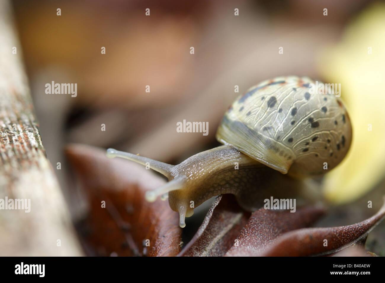 Garden land snail in nature environments Stock Photo