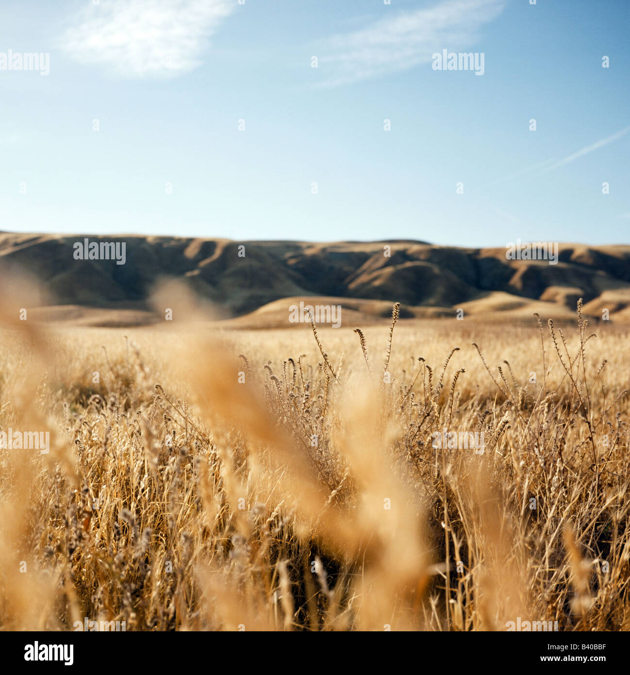 Golden hills and a blue sky along highway 46 in Chalome, California. - Stock Image