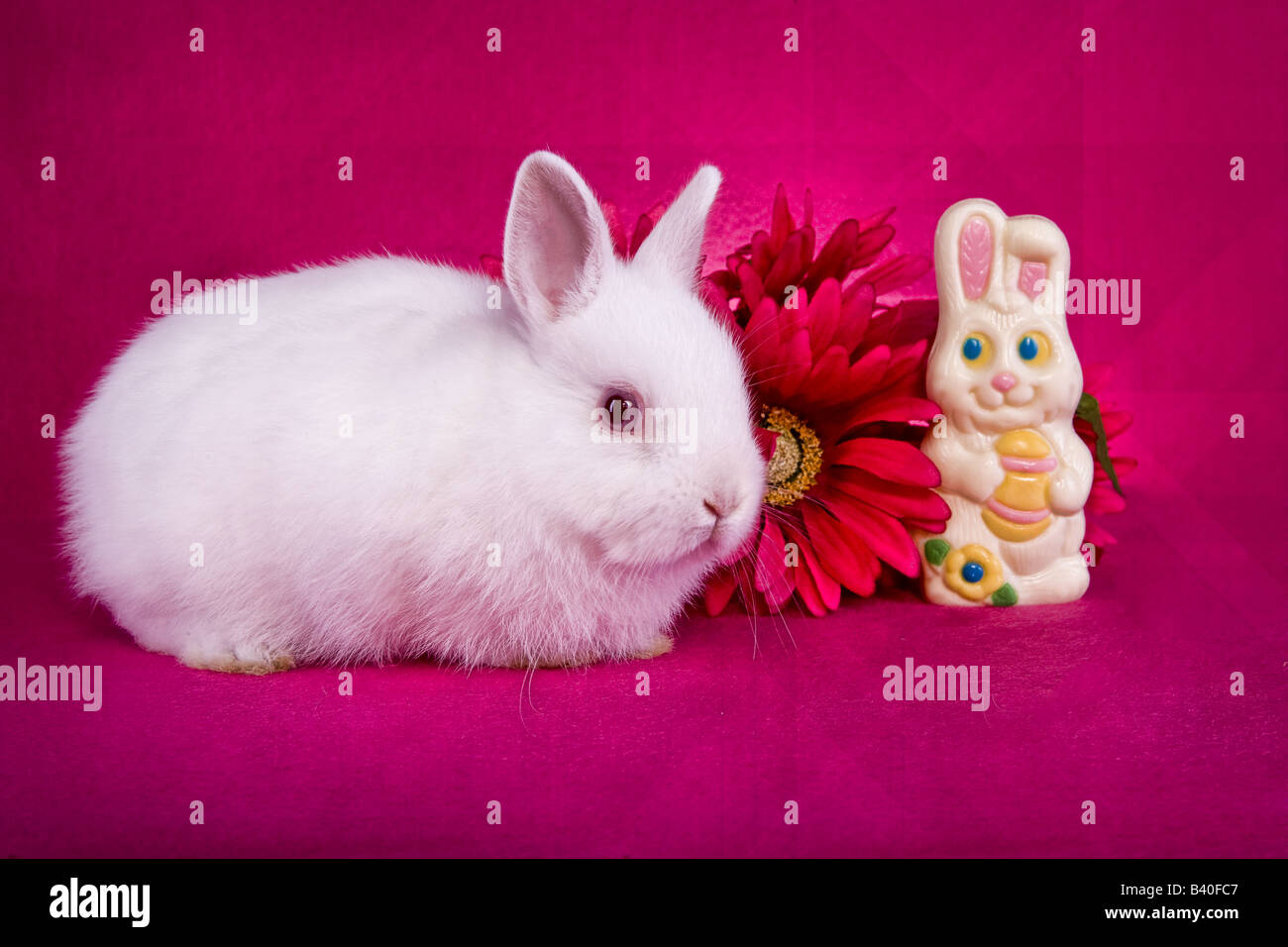 cute white baby easter netherland dwarf bunny rabbit on hot pink