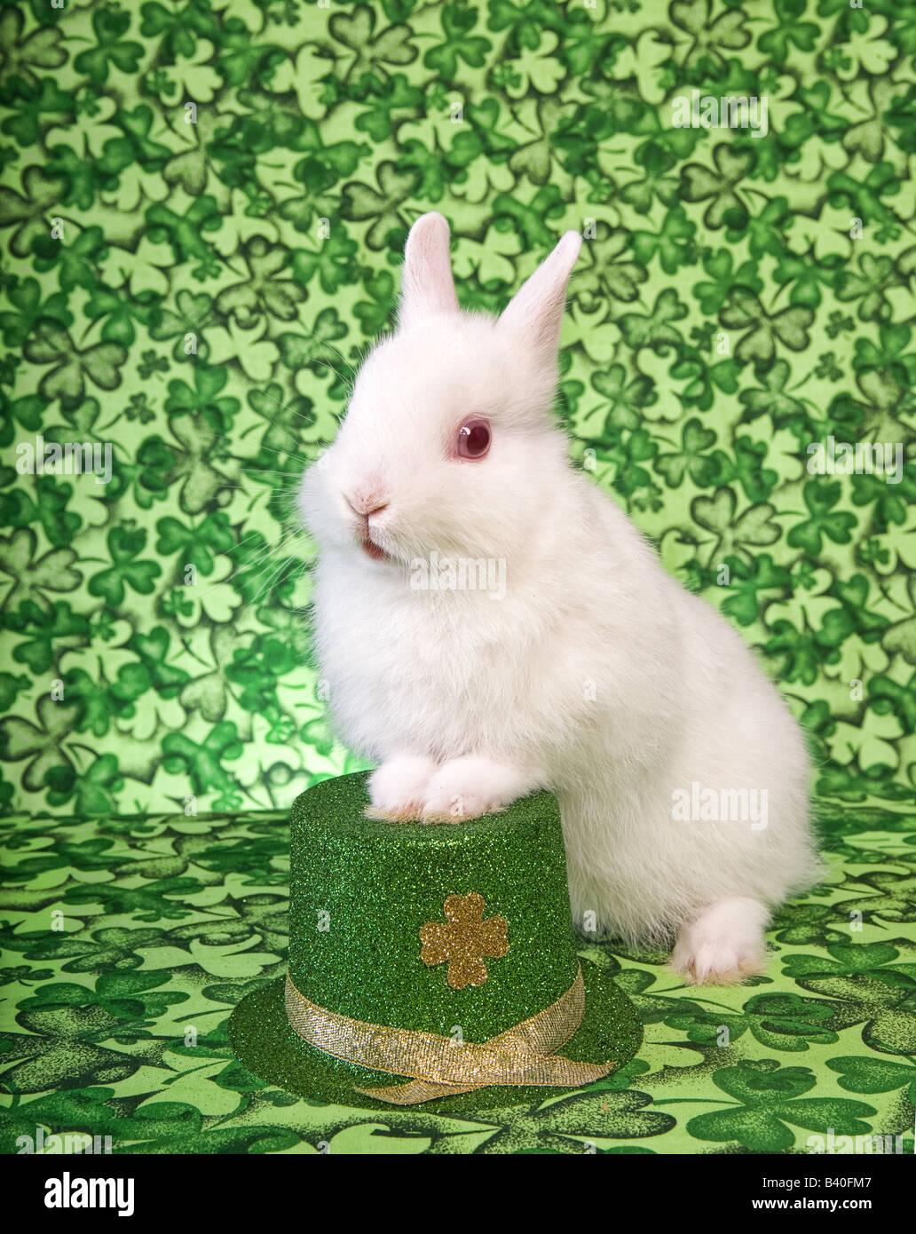 St Patricks Day white Netherland Dwarf Bunny Rabbit on green clover background with Irish hat - Stock Image