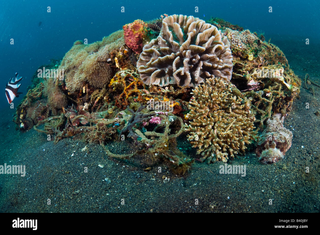 Corals and marine life slowly recycle and transform man made garbage and debris into small artificial reefs in Lembeh, - Stock Image