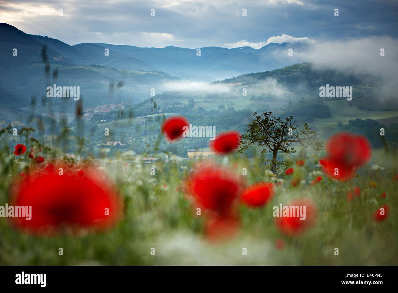 misty dawn in a poppy field in the Valnerina near Preci with the mountains of Monti Sibillini National Park, Umbria, - Stock Image