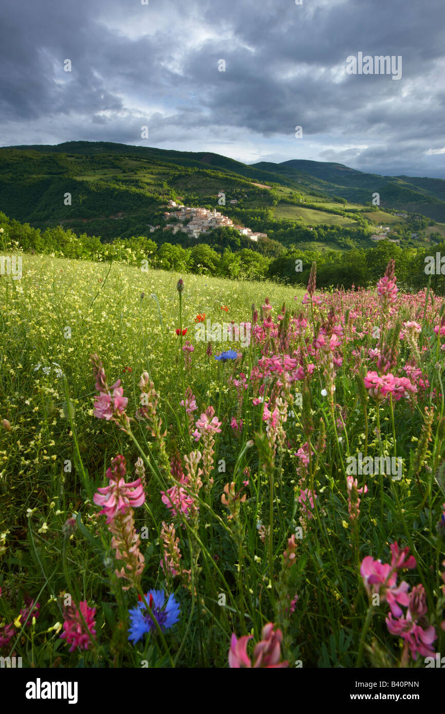 spring flowers growing in a field in the Valnerina with Preci beyond,Monti Sibillini National Park, Umbria, Italy - Stock Image