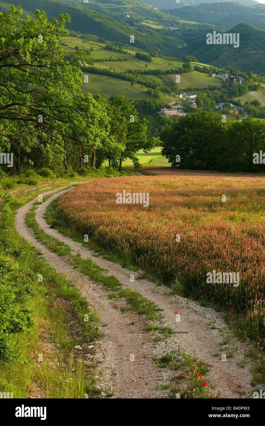 a farm track through fields of spring flowers in the Valnerina near Preci, Umbria, Italy - Stock Image