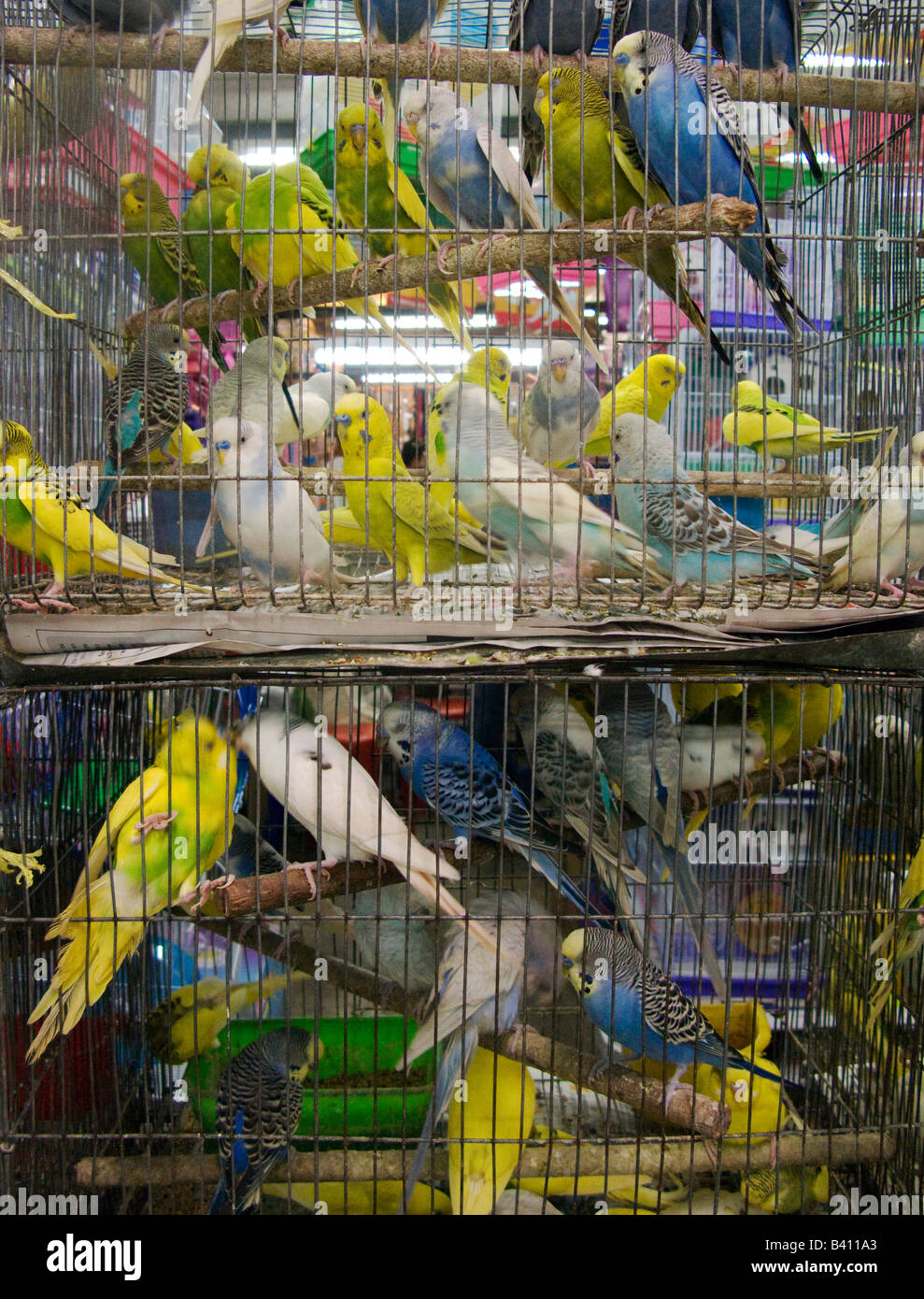 Caged birds for sale in the animal department of Bangkok's famous Chatuchak weekend market - Stock Image