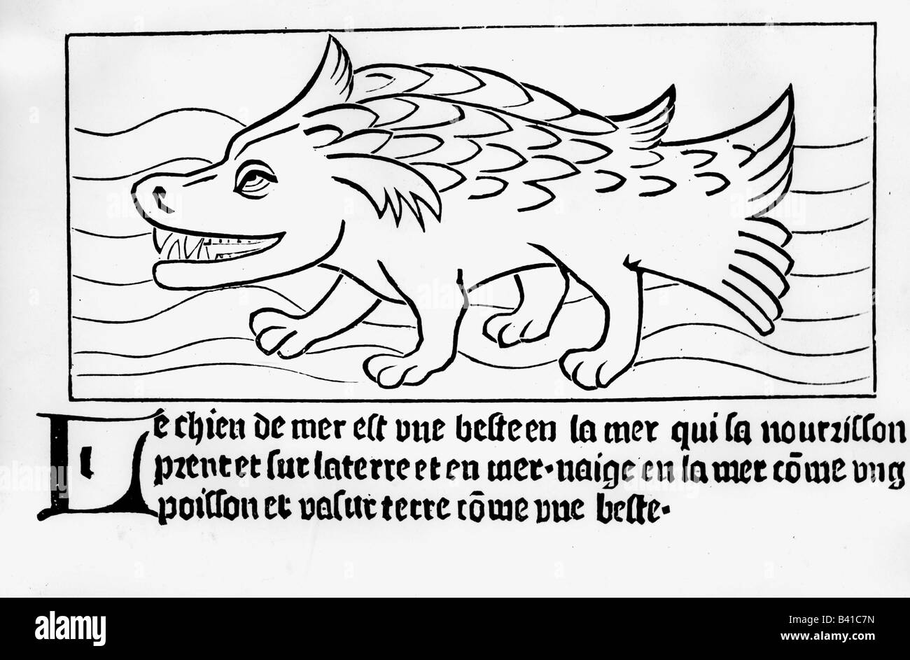 superstition, mythical creatures, 'sea dog', woodcut, 'Dyalogue des creatures', translation by Colard - Stock Image