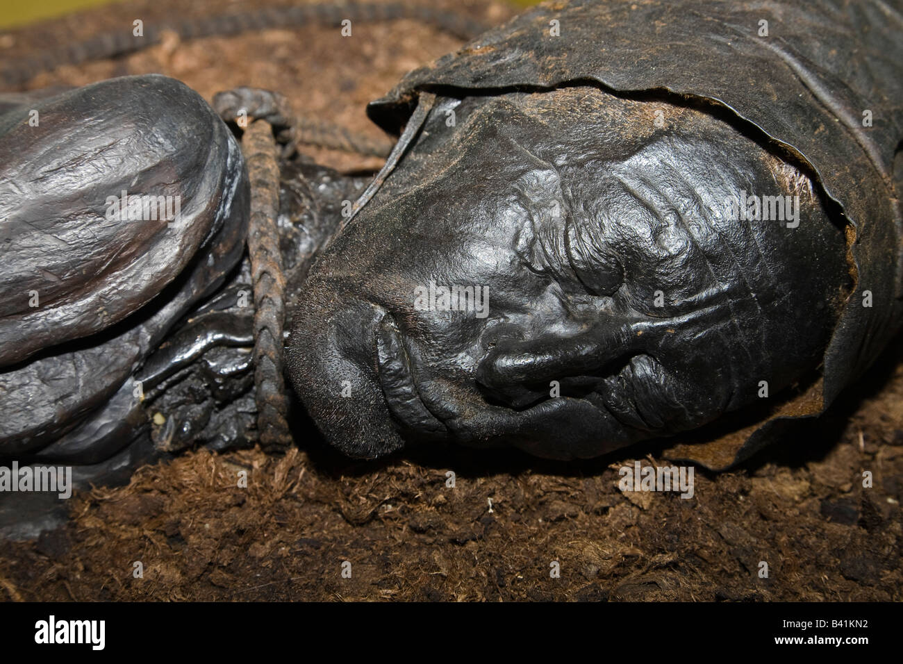 The finest example of a preserved 'bog body' - The Tollund Man at Silkeborg Museum, Jutland, Denmark - Stock Image
