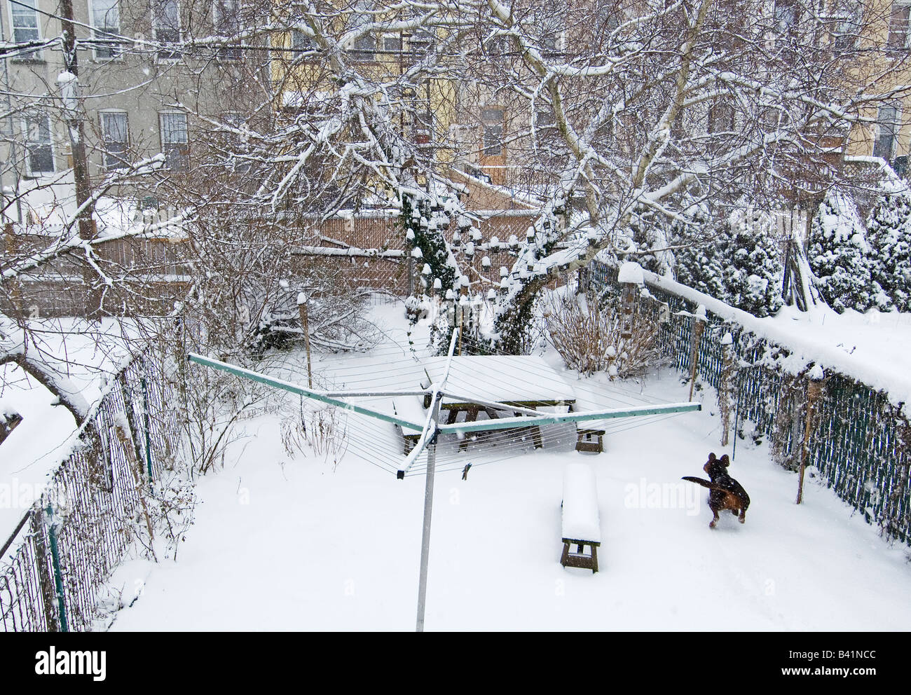 Snowy back yard with dog Stock Photo