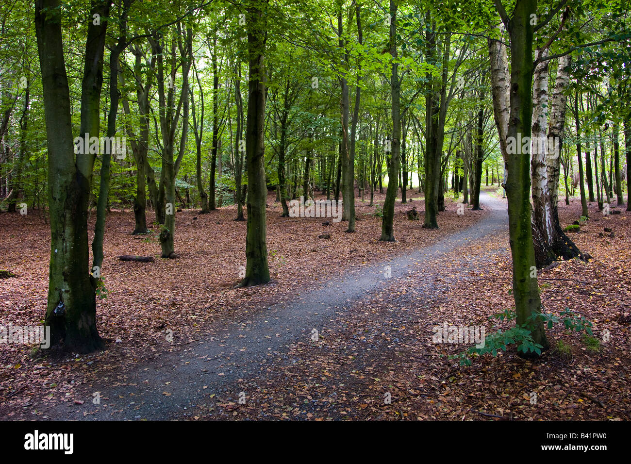 Forest path at Torslanda Sweden - Stock Image