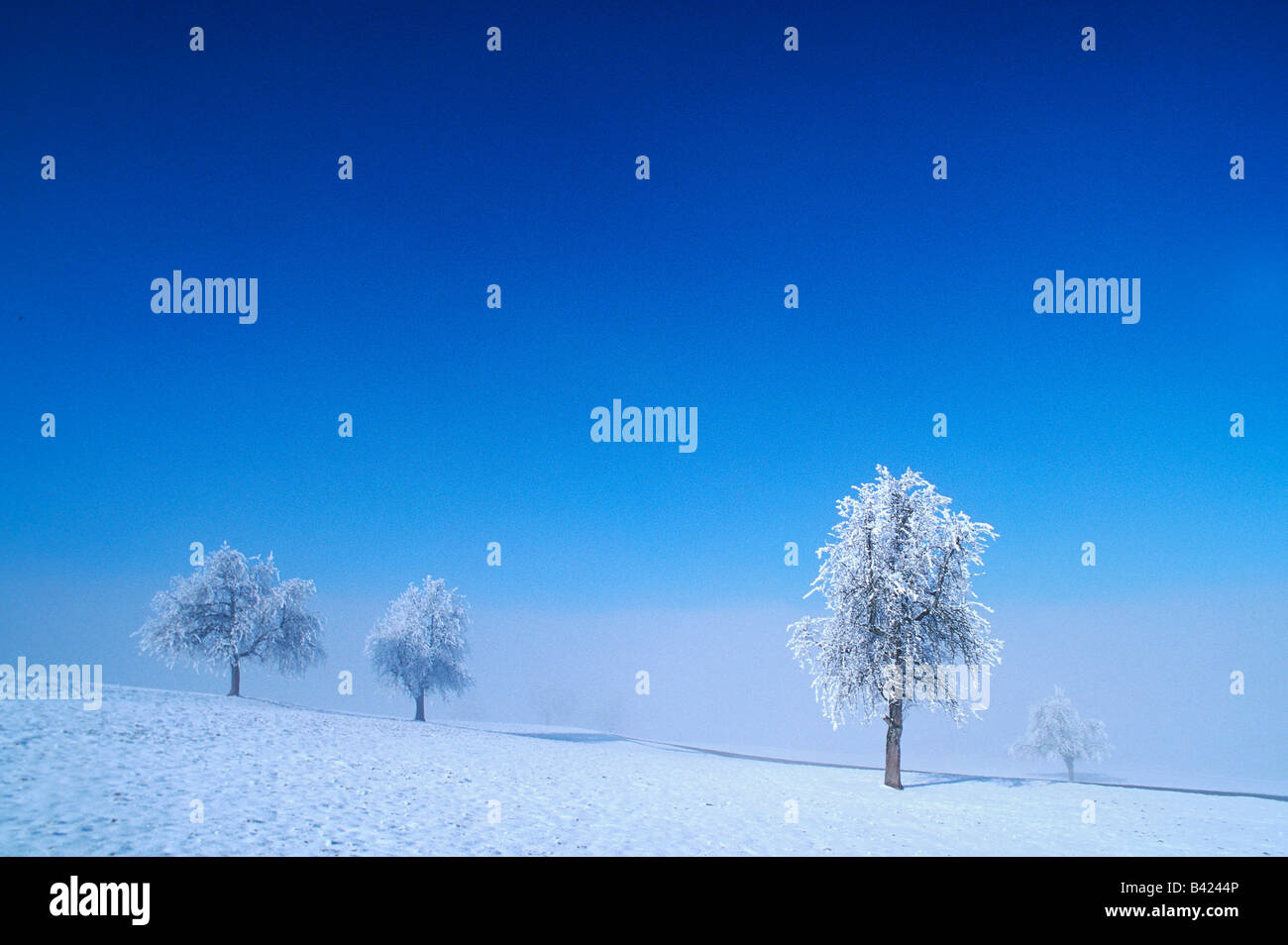 Bare trees with frost in winter Switzerland - Stock Image