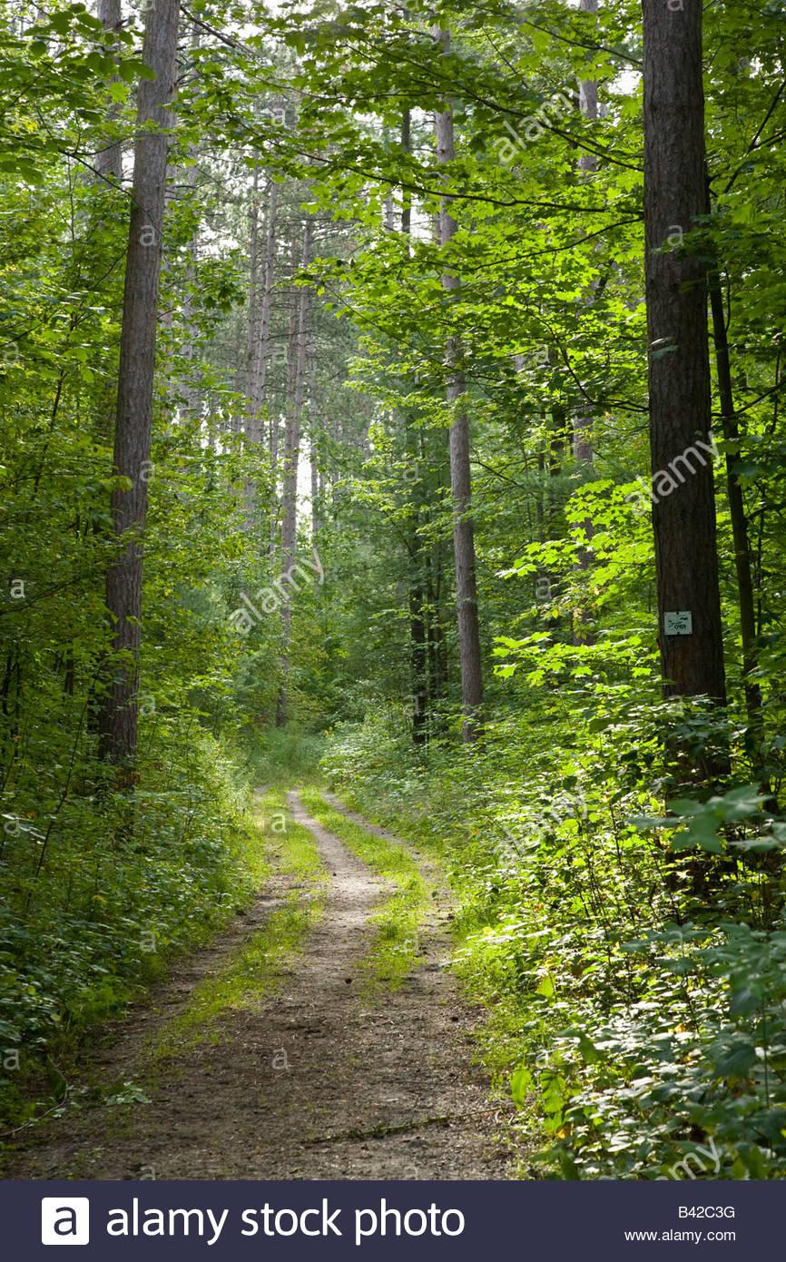 York region forest