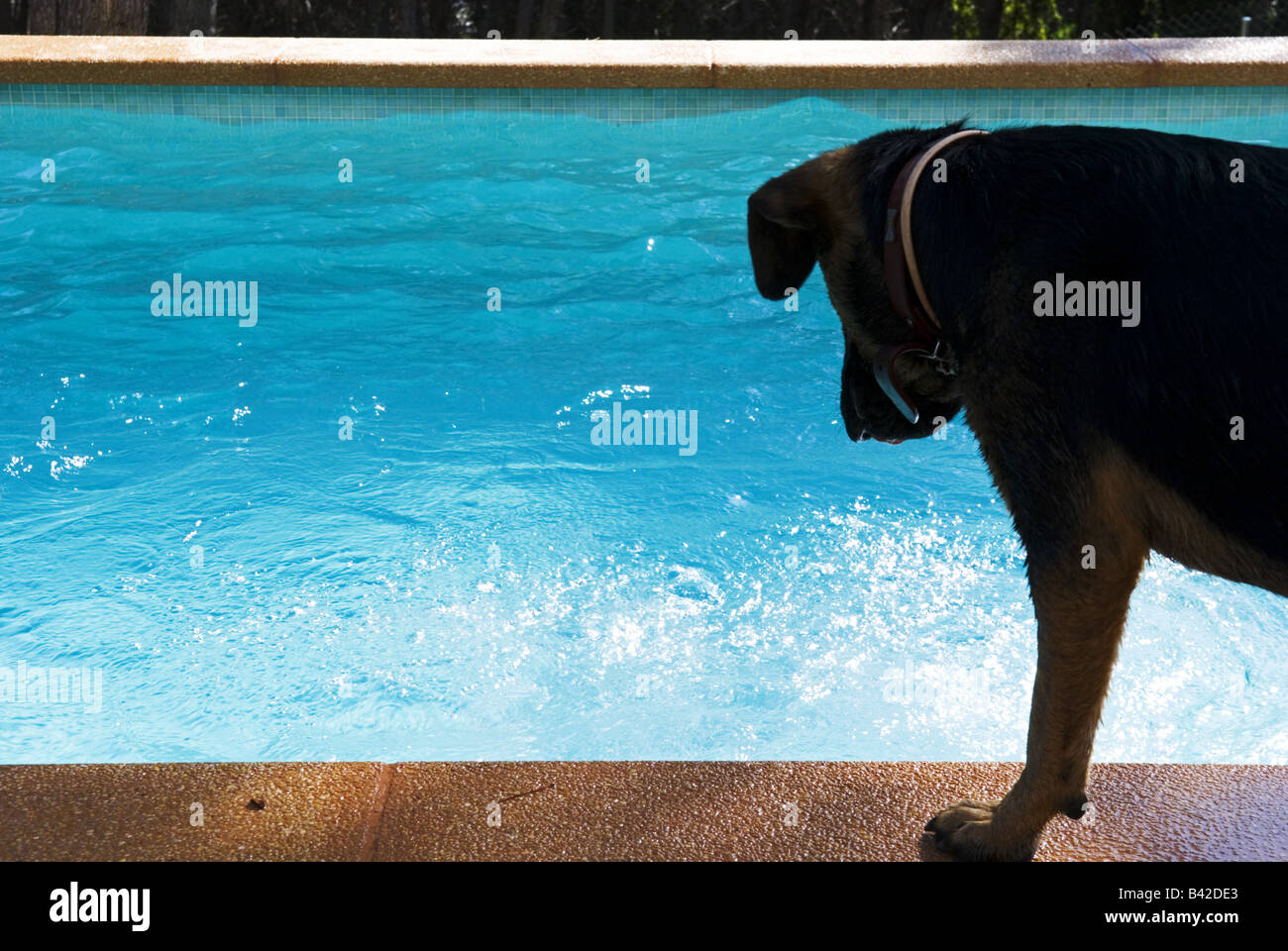 Drowning Dog Stock Photos Drowning Dog Stock Images Alamy