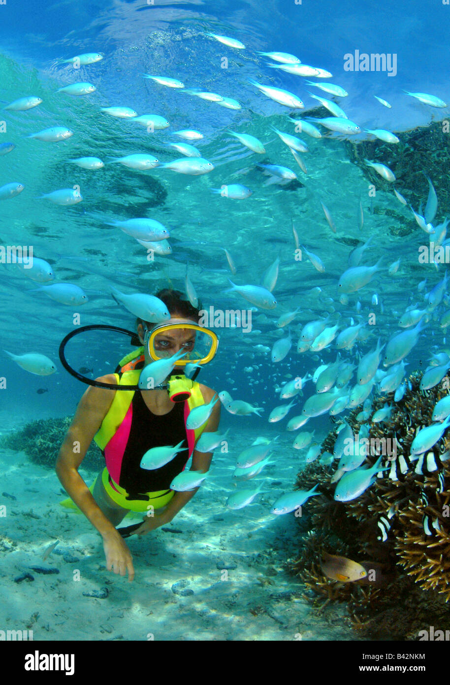 Coral Fishes and Diver Chromis Micronesia Mariana Islands Pacific Ocean Guam - Stock Image