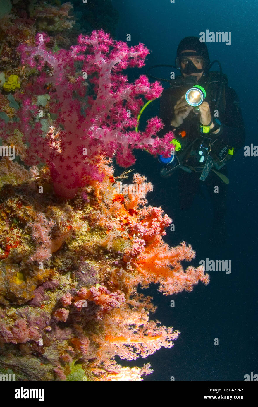 Night Diver and Soft Corals Caroline Islands Senyavin Islands Pacific Pohnpei Micronesia - Stock Image