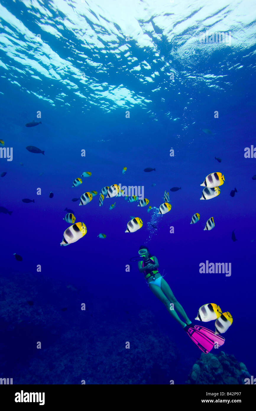 Butterflyfishes and Diver Chaetodon ulietensis Pacific Ocean Rota Northern Mariana Islands CNMI - Stock Image