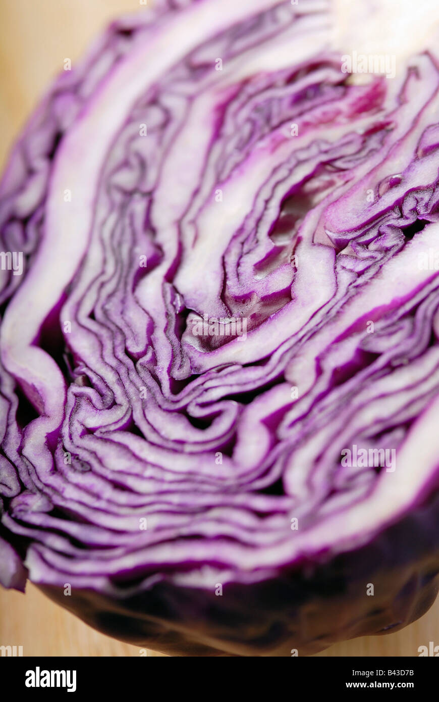 Close-up of a red cabbage - Stock Image