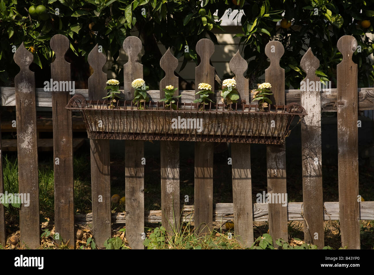 Victorian decorative wooden picket fence with wire flower box Stock ...
