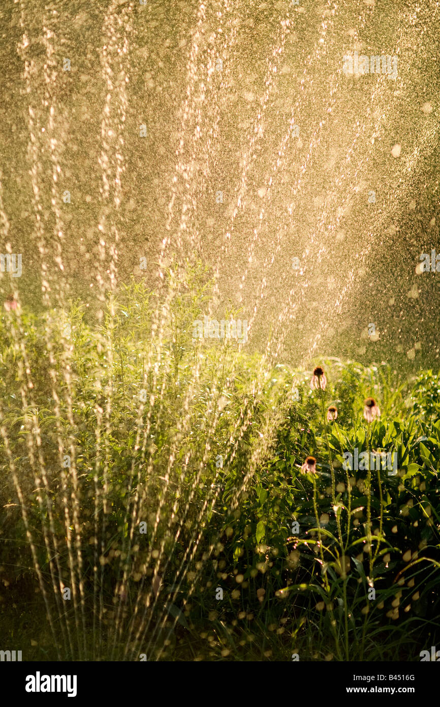 Sprinkler in yard watering flowers - Stock Image