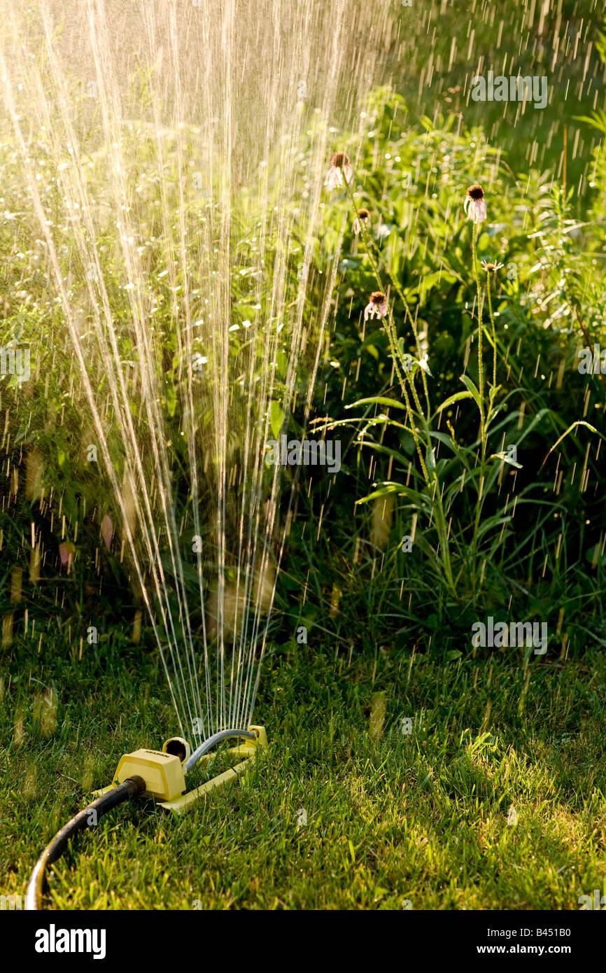 Sprinkler in yard watering flowers - Stock Image