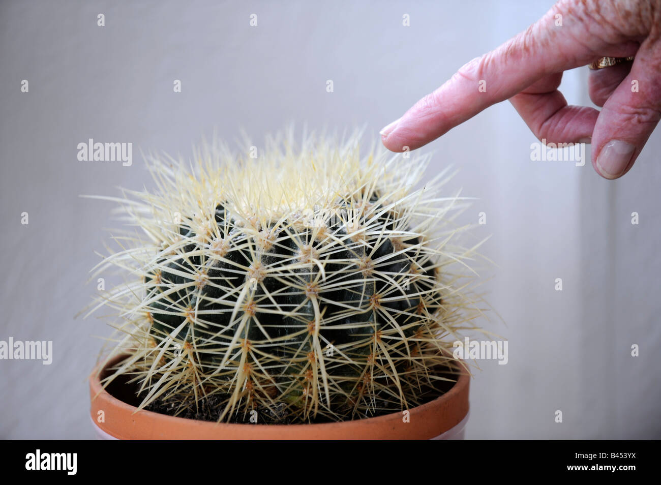Finger pointing at a cactus plant - Stock Image