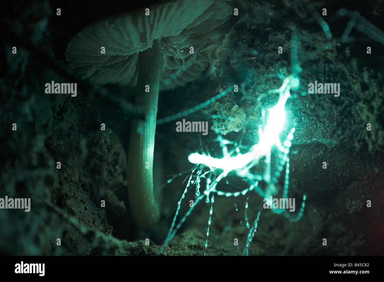 Glow Worm Cave Stock Photos & Glow Worm Cave Stock Images - Alamy