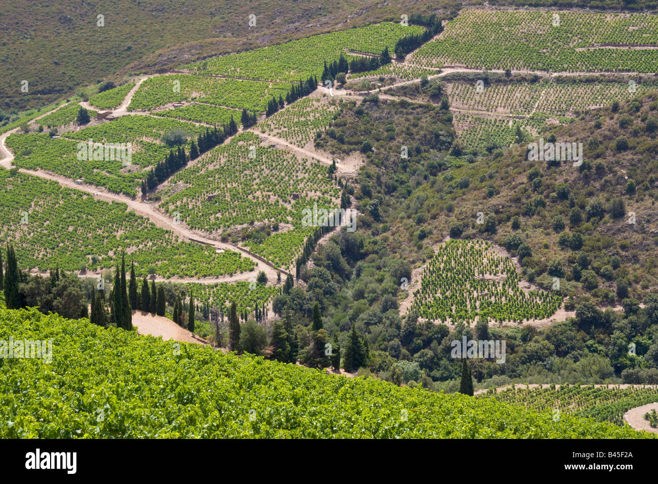 Vineyards at Collioure in the back country of the mediterranean Cote Vermeille / Southern France - Stock Image