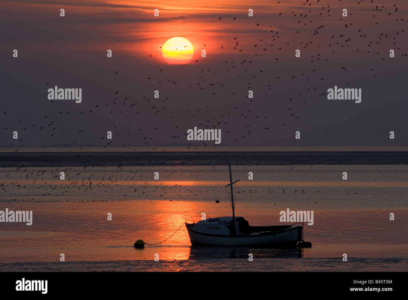 Sunset and Waders on The Wash Norfolk UK September - Stock Image