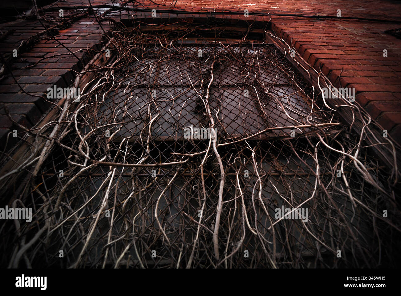 An intertwined growth of branches and vines overtake a window on an old warehouse in the Strip District, in Pittsburgh, - Stock Image
