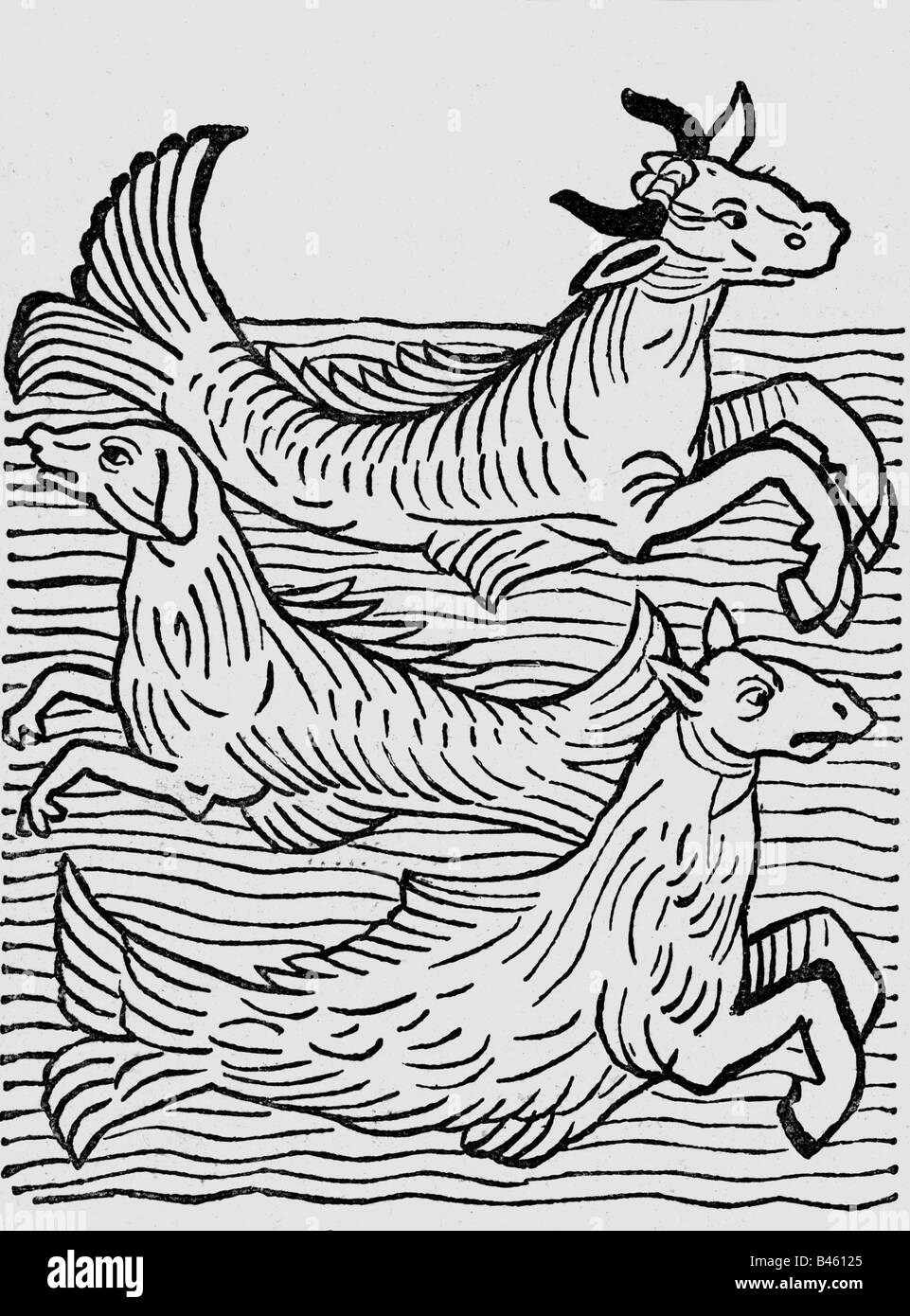 superstition, mythical creatures, 'sea-cow, sea-dog and sea-horse', woodcut, 'Hortus sanitatis', - Stock Image