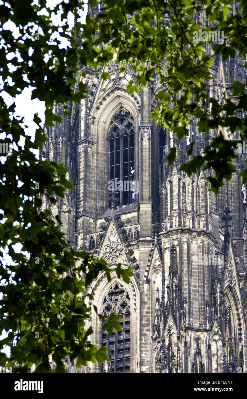 Facade of Cologne Cathedral through trees - Stock Image