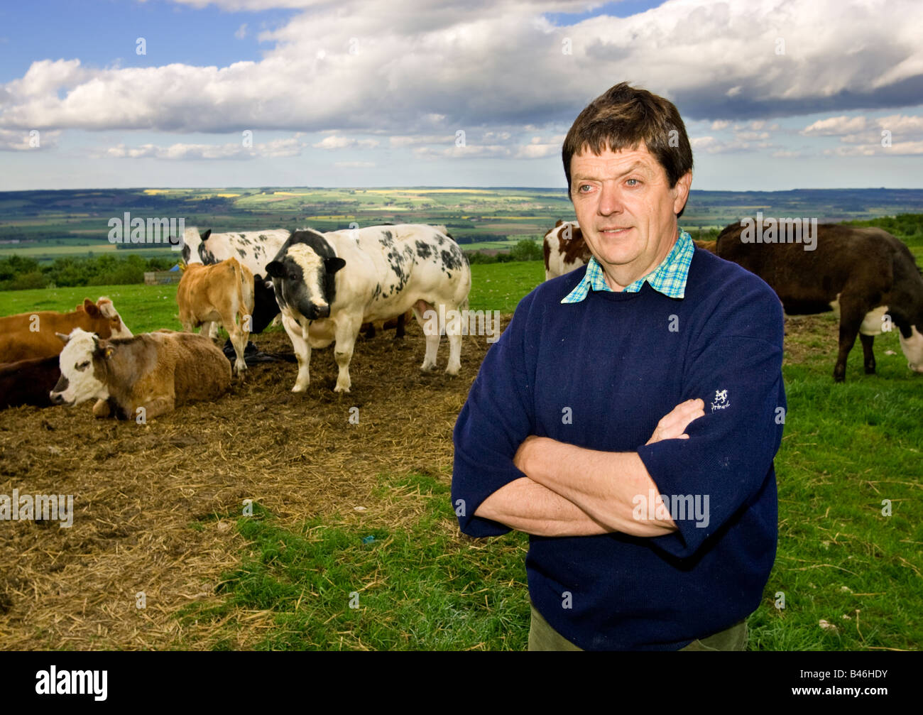 English farmer standing in field with his herd of cows, UK - Stock Image