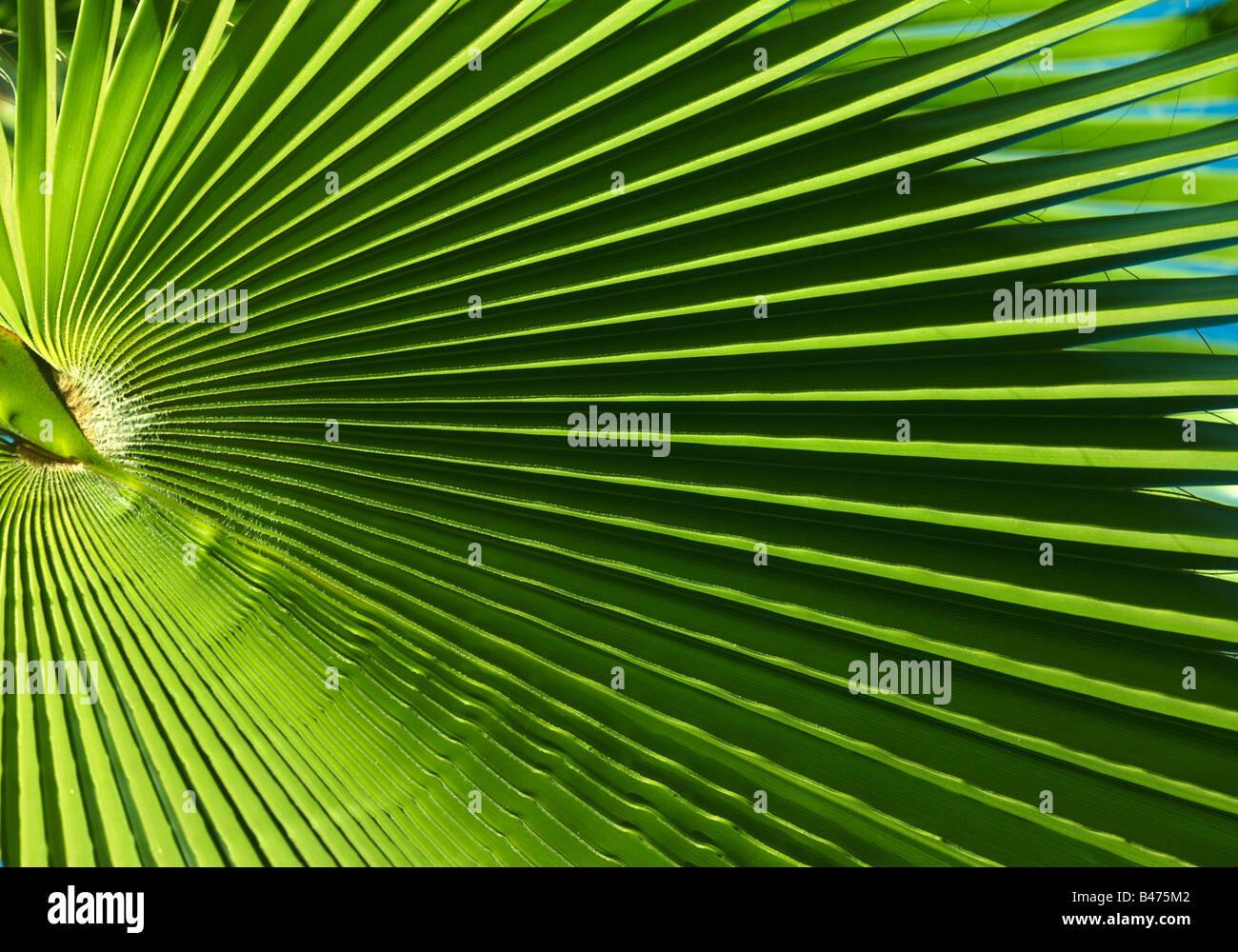 Palm leaf, Canary Islands - Stock Image