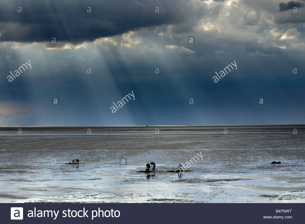 The Wash Norfolk landscape with storm clouds and bait diggers UK August - Stock Image