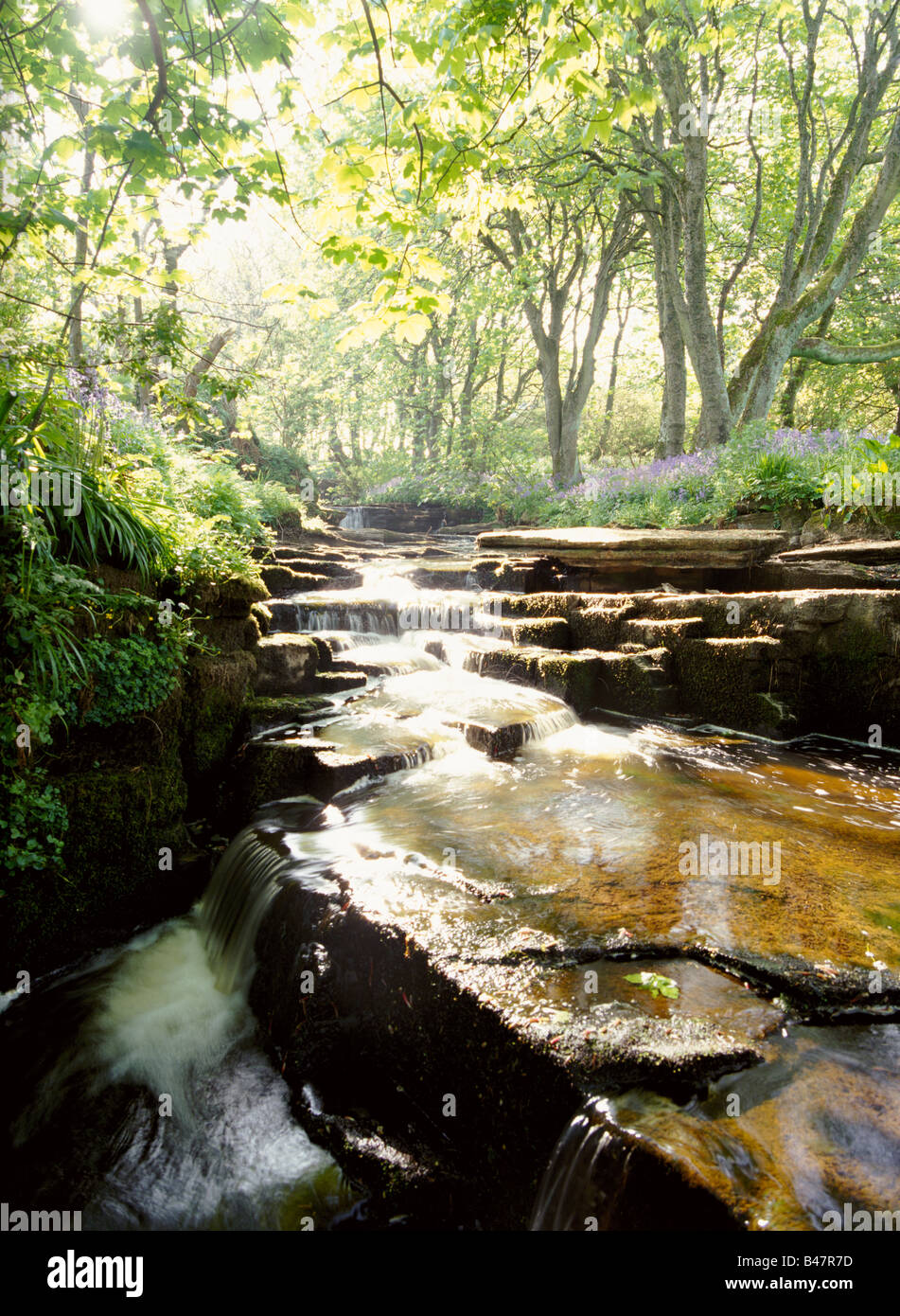 dh Woodwick House EVIE ORKNEY Waterfalls river bluebells wood scottish uk spring stream scotland Stock Photo