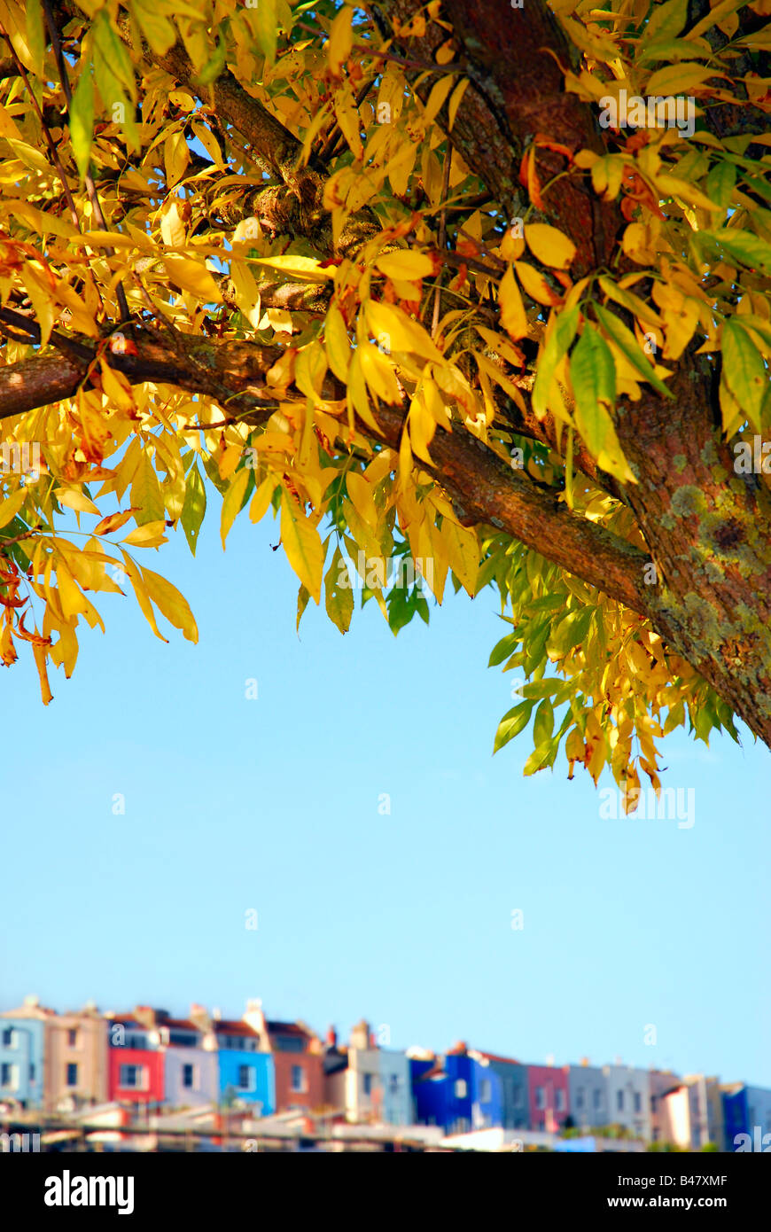 Colourful Autumn leaves on a tree over hanging a defocused row of terraced housing - Stock Image