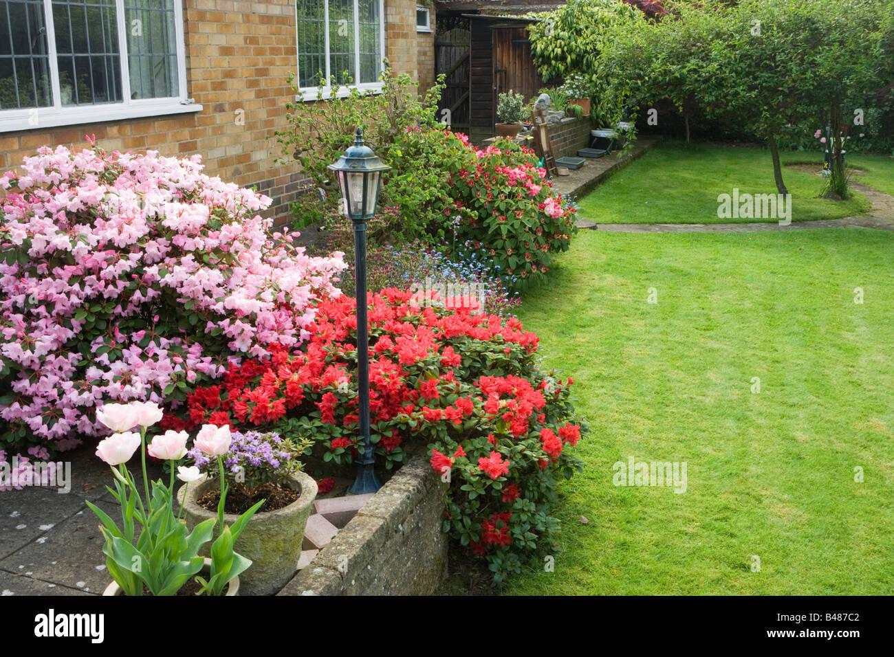 Medium sized garden with azaleas. Surrey, UK - Stock Image