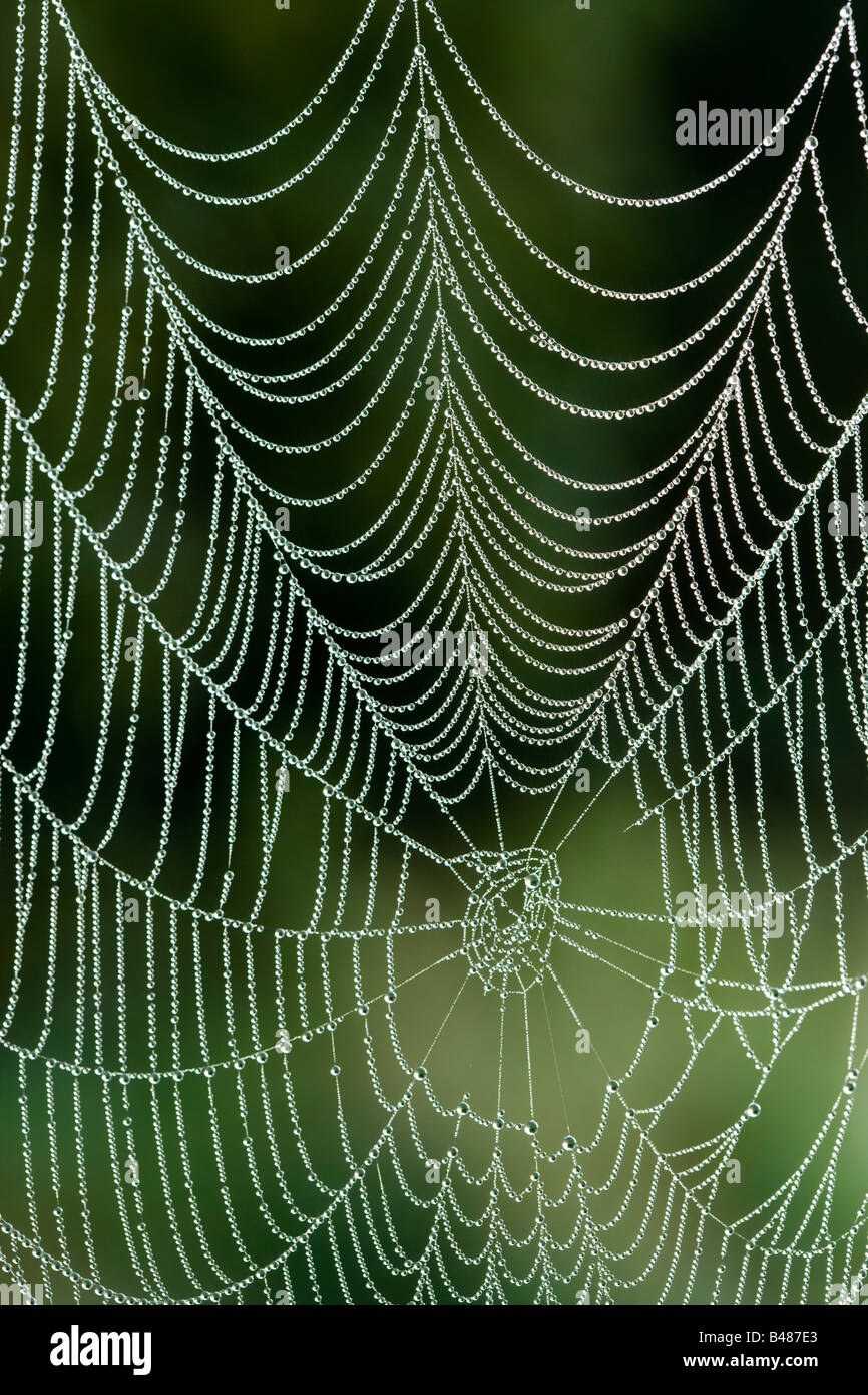 Dew on spider's orb web. Surrey, UK - Stock Image