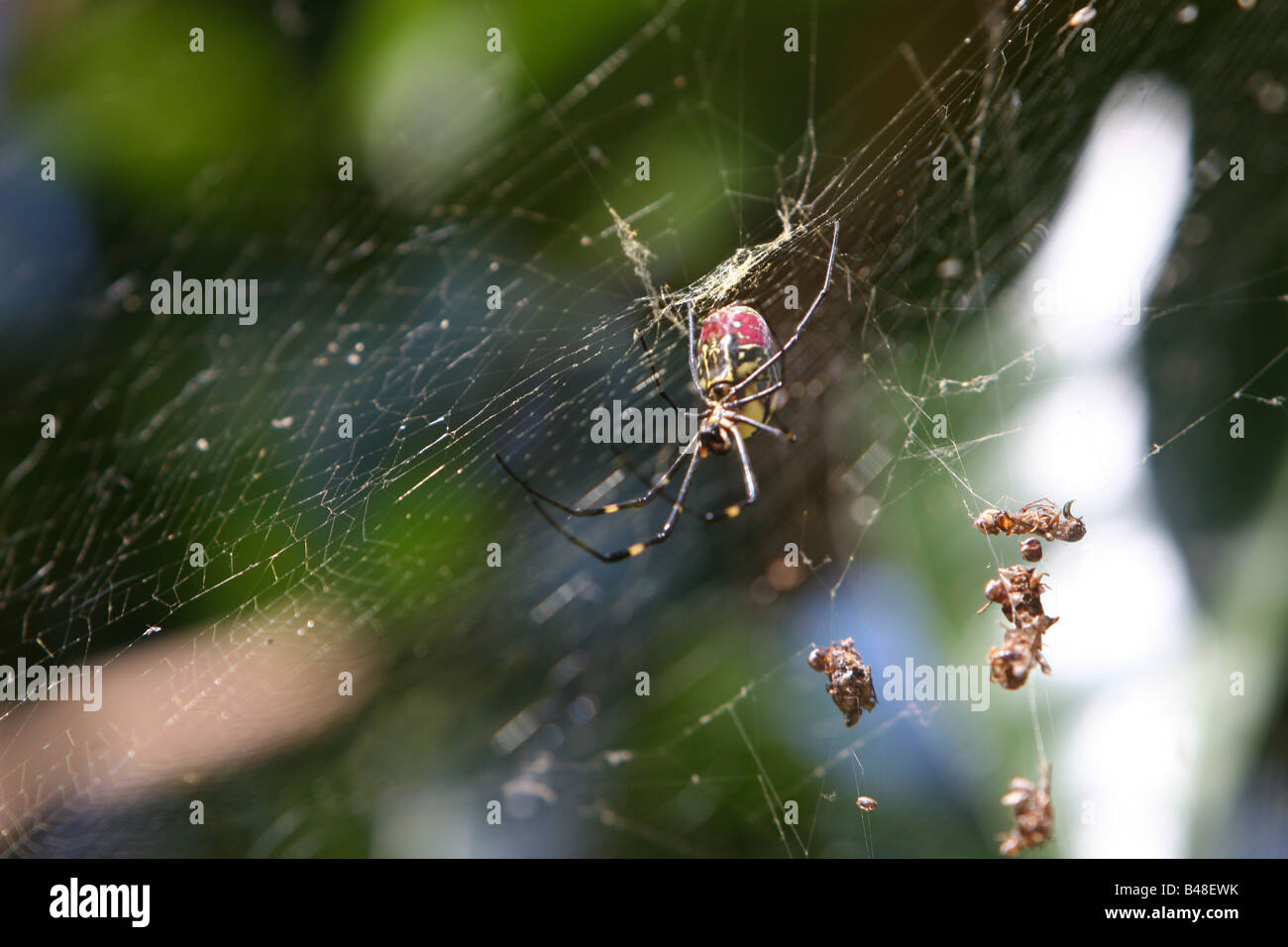 Spider web close up - Stock Image