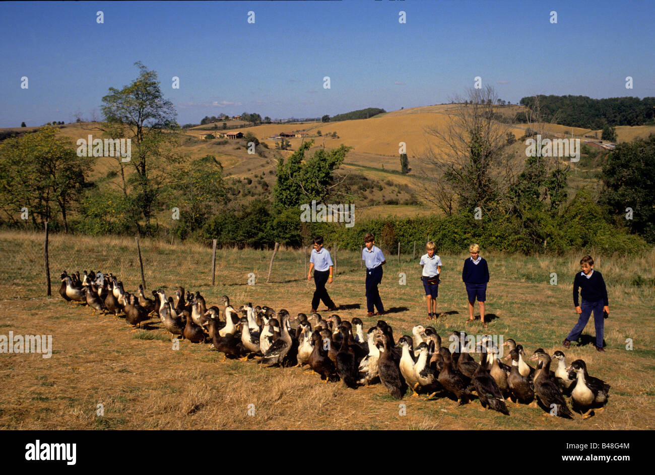 Boys make a school visit to a free-range Foie Gras duck farm near Toulouse. - Stock Image