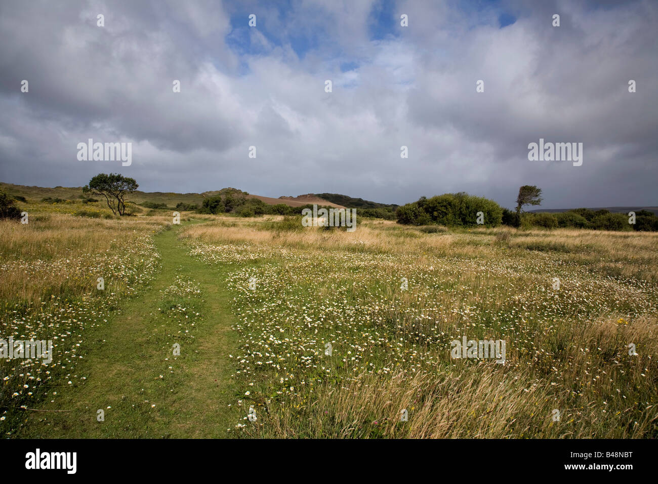 sand dunes at braunton burrows devon Stock Photo