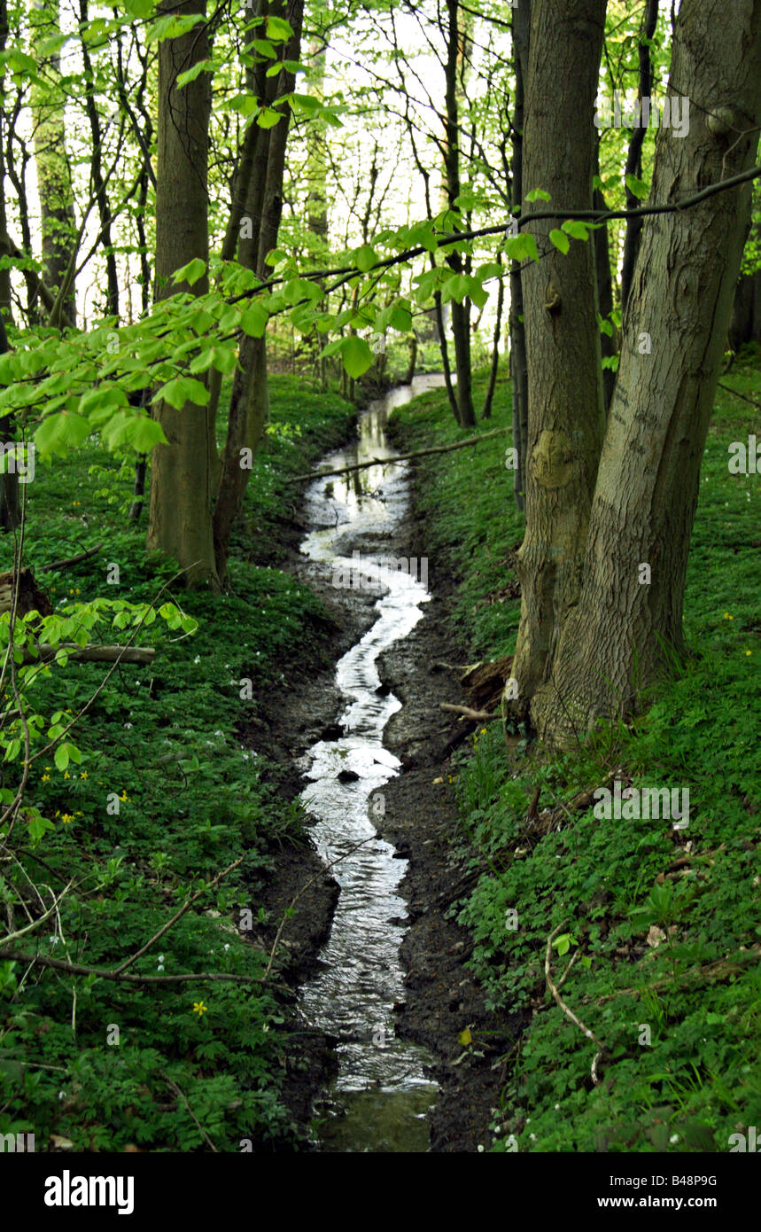 Small brook in green woods - Stock Image