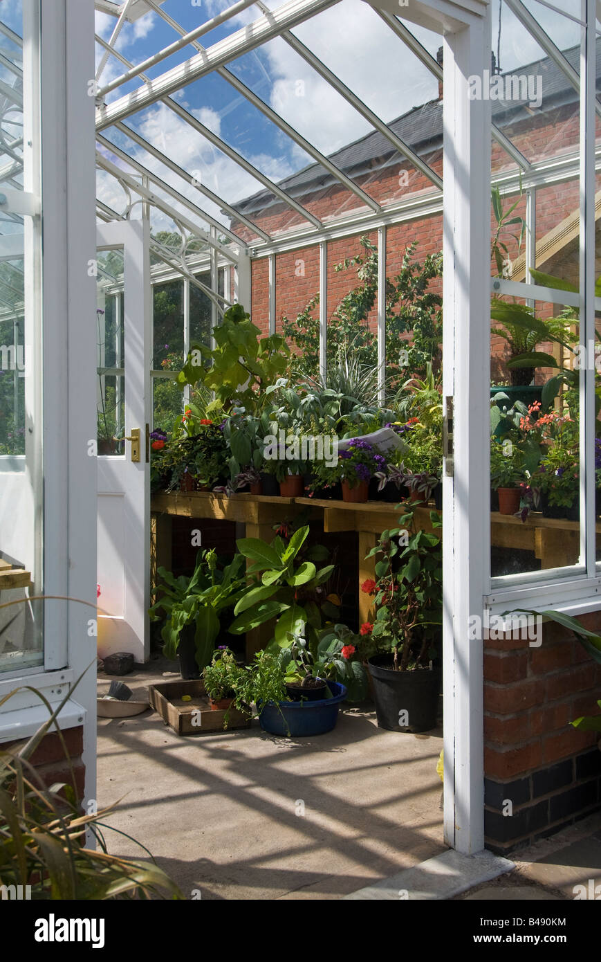 Pot plants on benches in a greenhouse at Hill Close Victorian gardens. Warwick, UK - Stock Image