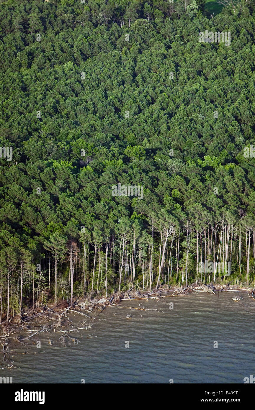 aerial above Chesapeake Bay forest at Maryland's waterfront - Stock Image