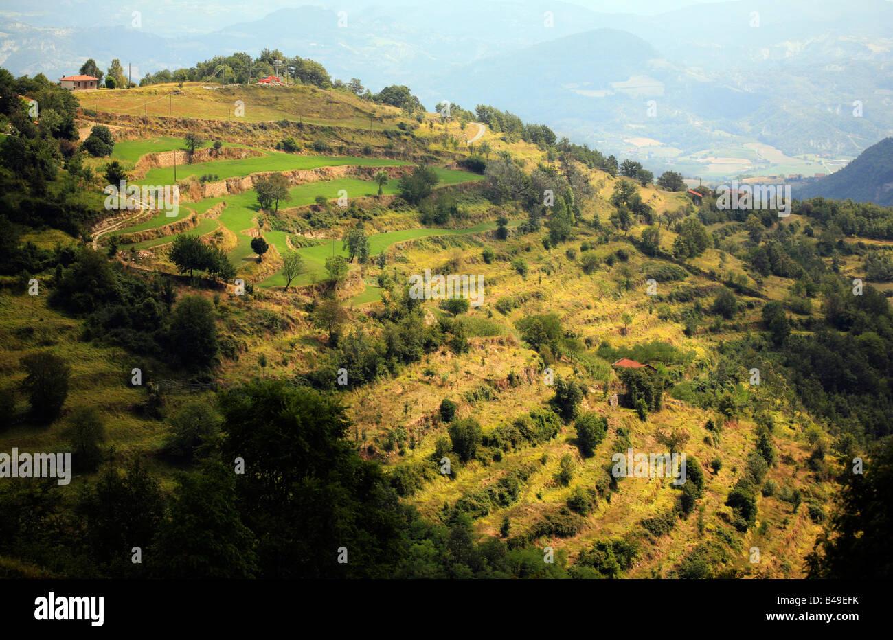 Terraced hillside in Piedmonte Italy - Stock Image